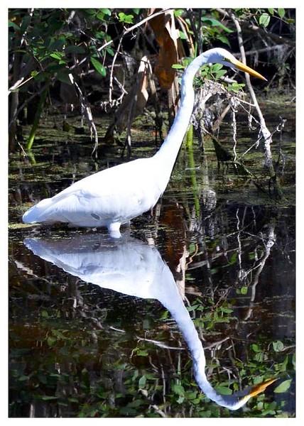 Everglades City (29) F.jpg
