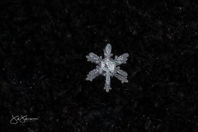 snowflakes-1269.jpg