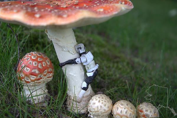 Mushroom Star Wars fun