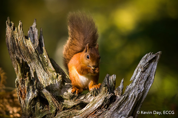 IPF Nature Photographer of the Year 2016/2017 – National Finals