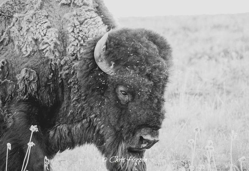 Bison Range 2021-235.jpg