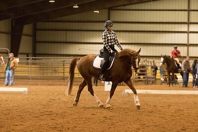 Horse 655