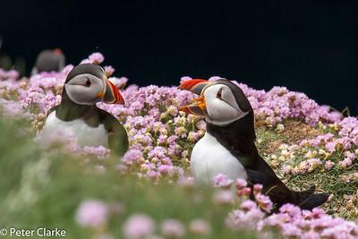 Scotland- Shetland Islands