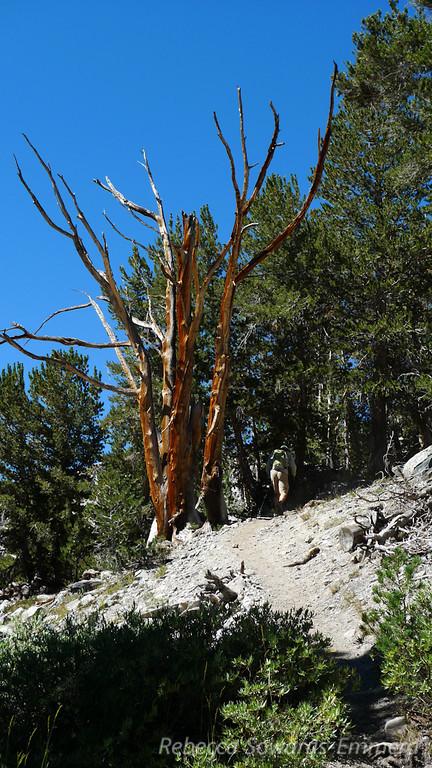 Yosemite: Mount Conness - Calipidder