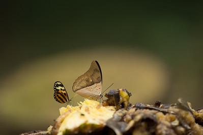 Costa Rica September 2013