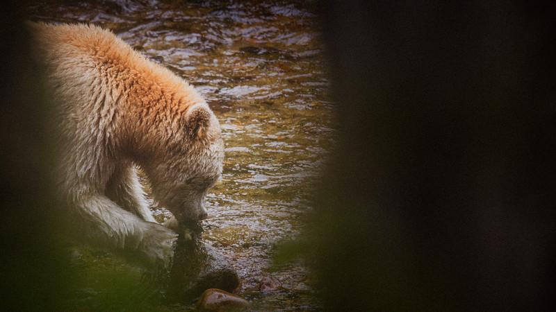 White Bear at Riordan Creek September 2019.jpg