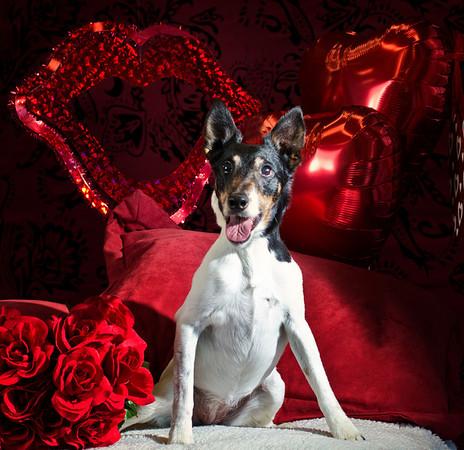 Valentines Customers Photos