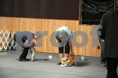 FDKC Dog Show