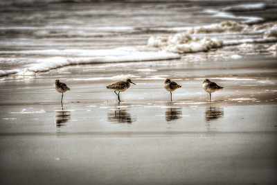 Topsail Island Sand Pipers