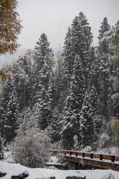 10.12 Snowstorm Yankee Boy