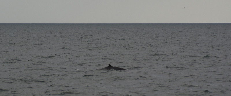 A whale!  Actually, we saw about 10 whales, porpoises, dolphins, all sorts of birds, and puffins.
