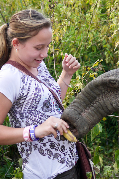 The inquisitive elephant trunk is hungry for a banana treat when we come to visit the mother and baby.