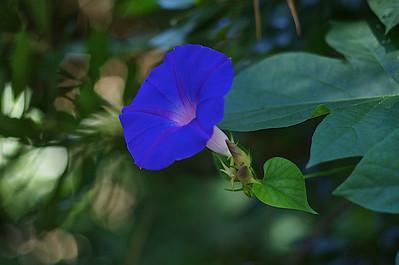 Magnolia Plantation and Gardens - Charleston, SC