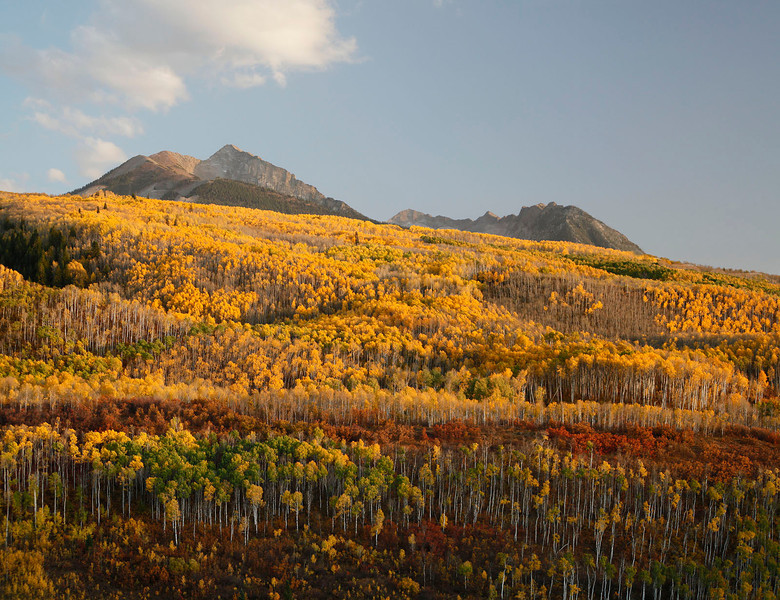 Fall color on mountain side, McClure Pass, Colorado