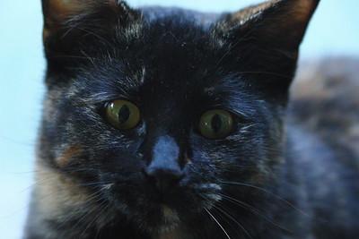 Cats, up close.