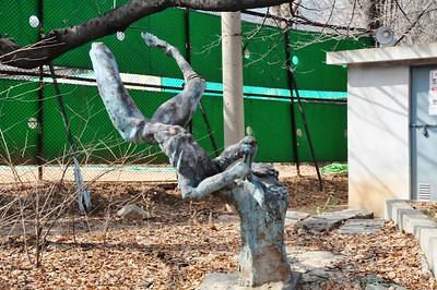 KOREA-Picture set 39 - SIHC urban walk - Obama Hall Arboretum