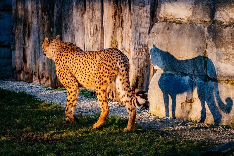 Tonis Zoo-0278.jpg