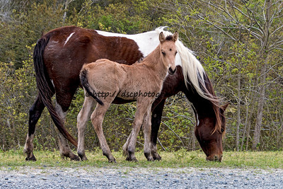 Miracle's Natural Beauty's Colt