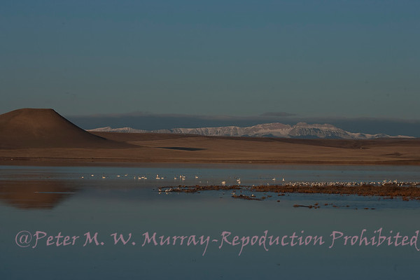 Freezout Lake Montana