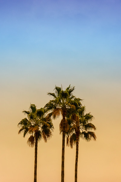 Palm Sky VIII