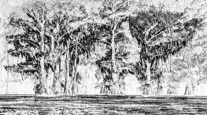 Cypress_Swamps_1117_PSokol-87-Edit-3.jpg