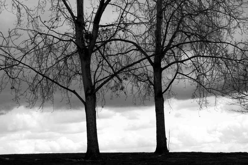 080408-001BW (Treescape; Two Bare Trees, Stormy Sky, Myrtle Edwards Park, Seattle, WA).jpg