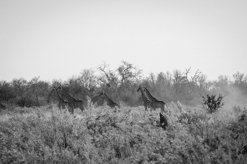 Botswana_June_2017 (338 of 6179).jpg