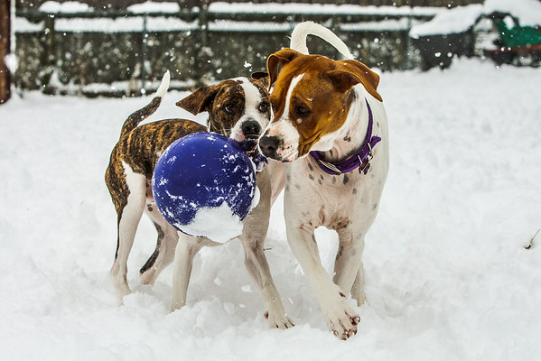 What Else But More Snow Dogs