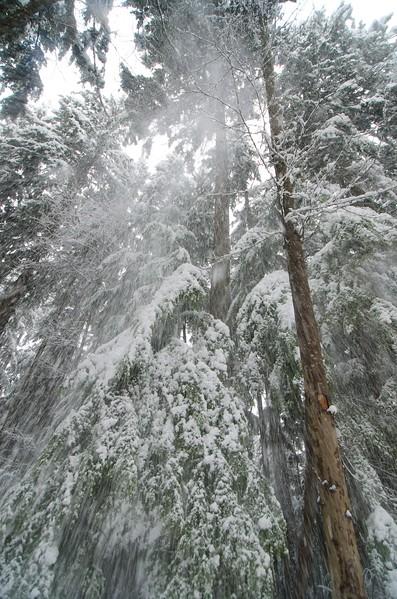 Snow day 1 238.jpg