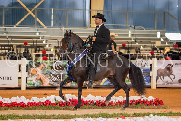 270-271-Performance 3 - 4 yr colts geldings