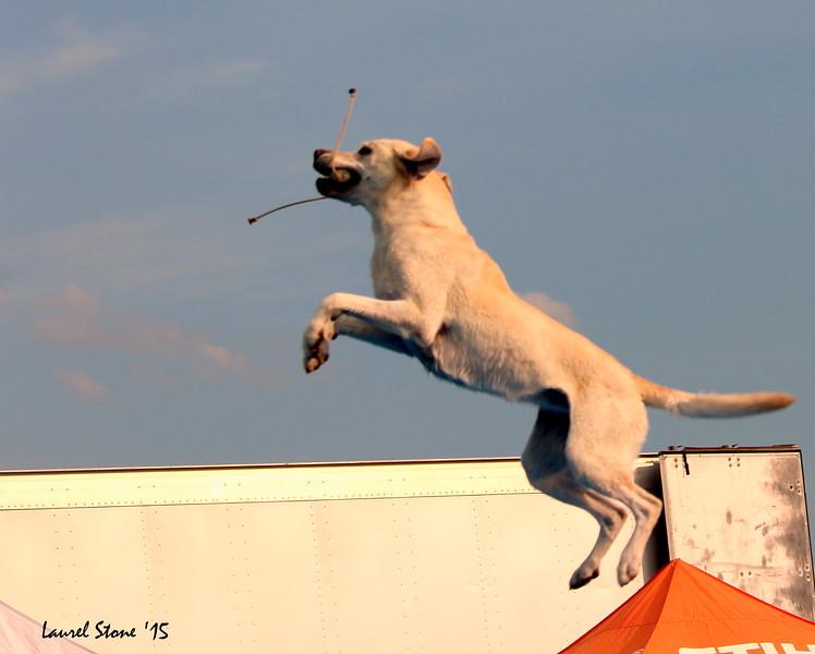 2015.8.21 Dock Dogs Lambeau-129.JPG