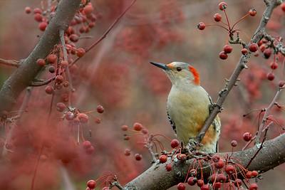 Song/Wild Birds
