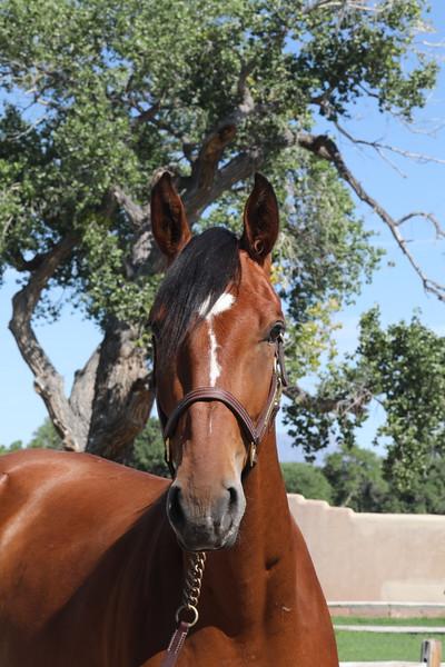 Auction Horses Hashtag RC, Billabong RC, Kilauea RC, Empire Moon RC, La Rocketman RC, Neptune RC, Eagle Moon RC Sept 2020