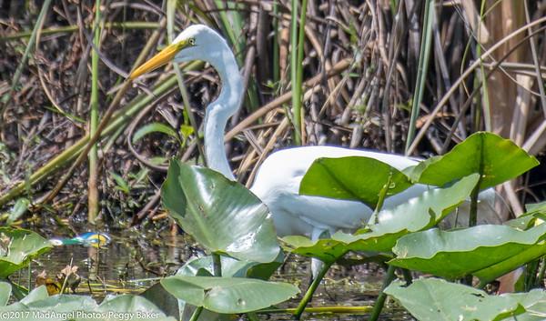 day 4 So FL Birding-68