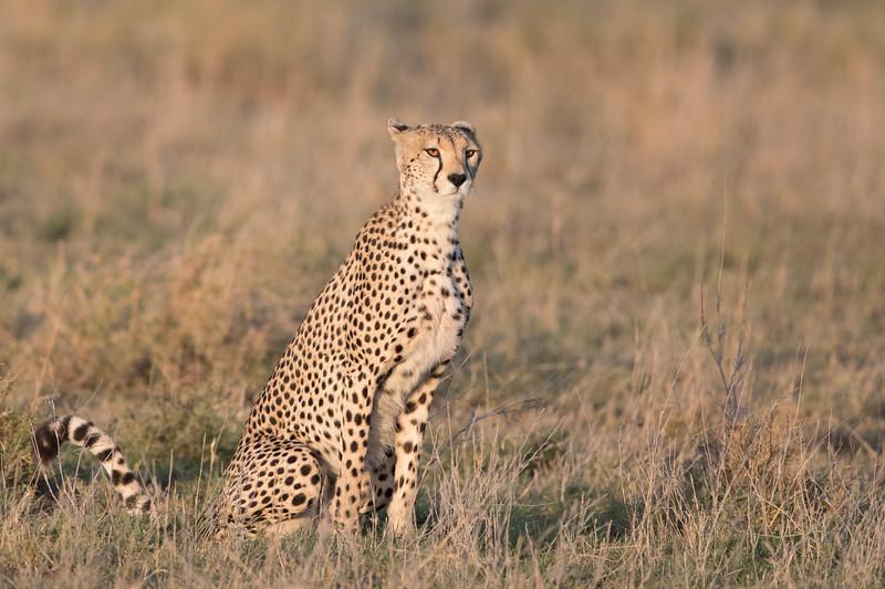 Africa - 101616 - 5907.jpg