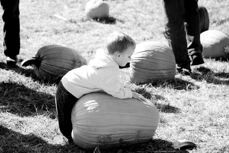 A trip to Bengston's Pumpkin Farm with the family on Saturday, October 16, 2010.  (Jay Grabiec)