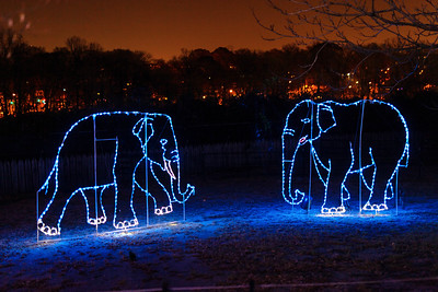 National Zoo in lights