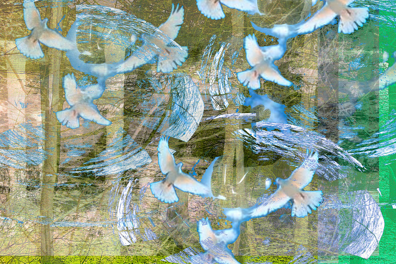 Doves in the Temple