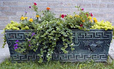 Left side backyard planter. June 2007