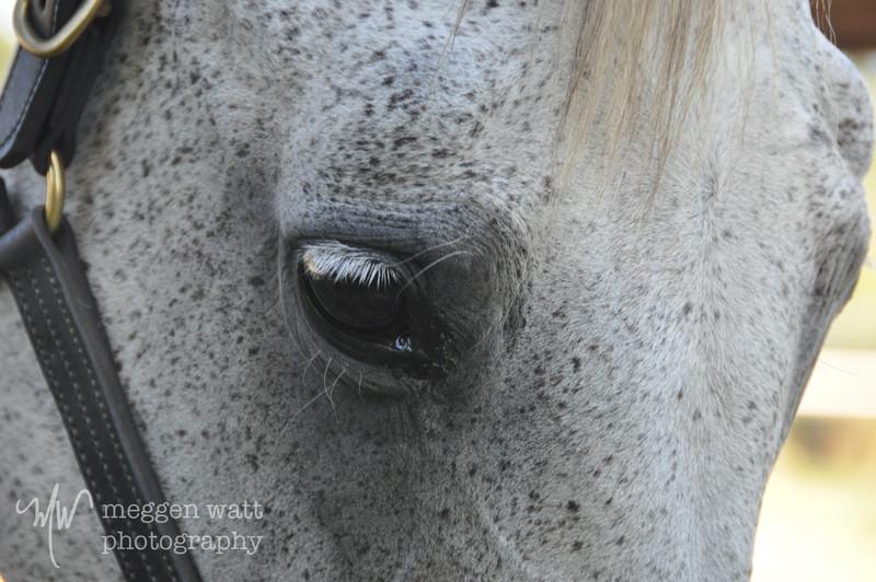 EB&Horses-025.jpg