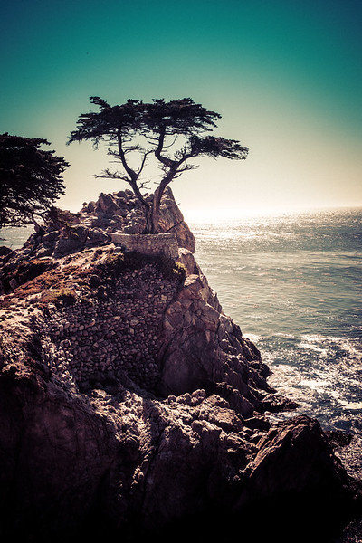 """The Lone Cypress Tree This is kind of a famous tree, I think. Well, I guess it's famous if you've heard of it, otherwise it's completely unknown. It's one of those things you find out is famous, and then every time you see it, you think, """"Oh that is the famous tree.""""It's kind of like when you play trivia games with annoying people. You know the ones. Every now and then, a question comes up that is INCREDIBLY TRIVIAL and some annoying person will guffaw, """"Oh My God, that is sooooo easy!"""" Of course it is easy if they happen to know this incredibly small piece of arcane information! Either you know it, or you don't.- Trey RatcliffClick here to read the rest of this post at the Stuck in Customs blog."""