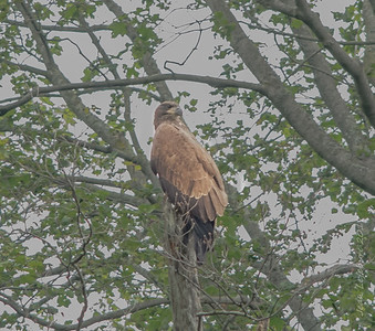 Eagles and Ospreys on local rivers