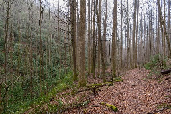 Clawhammer Cove Trail (#342)