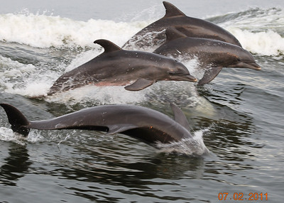 Dolphin Cruise - Cold Mil Fleet Orange Beach