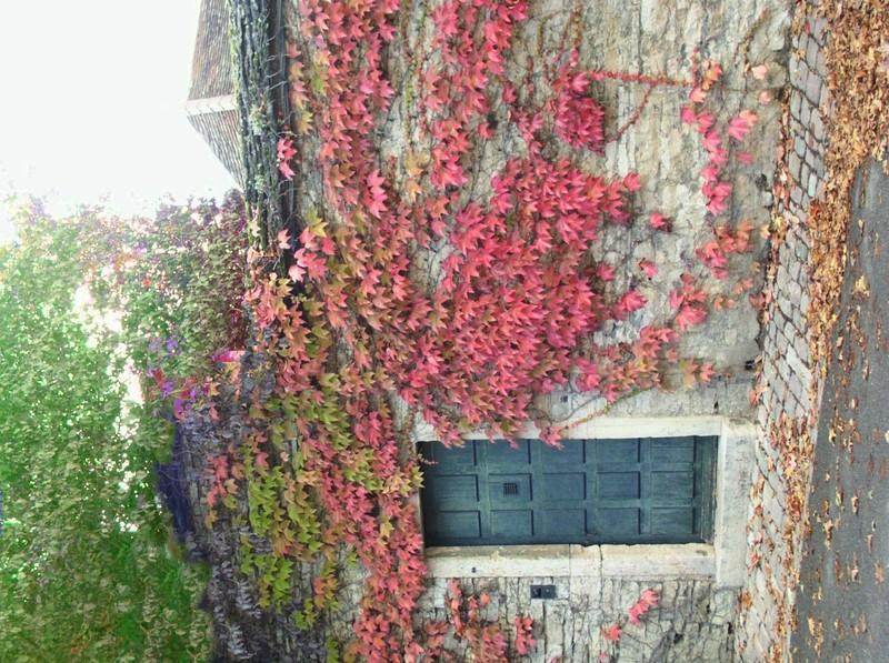 door and leaves2.jpg