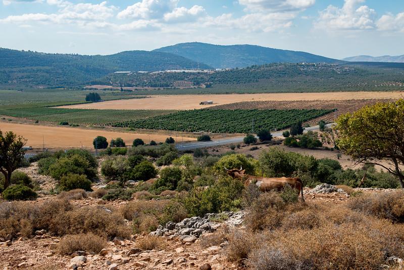 Israel-7431.jpg