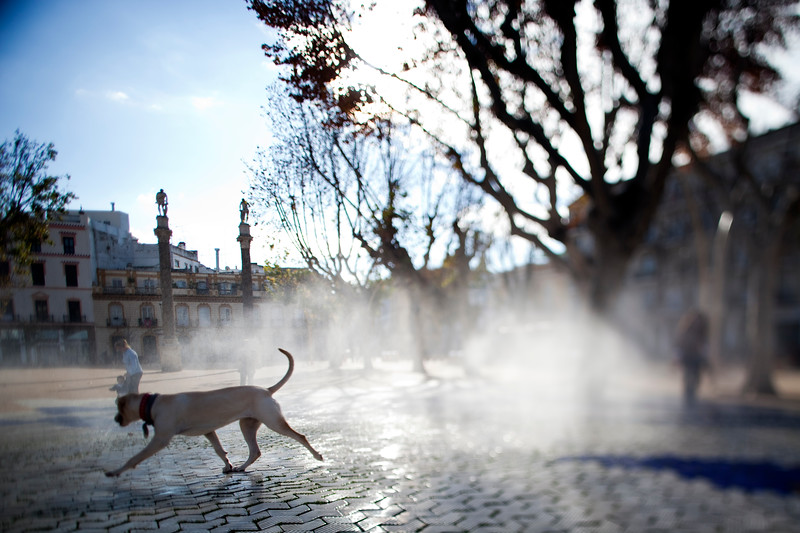 Dog by a fountain, Alameda de Hercules square, Seville, Spain. Tilted lens used for shallower depth of field.