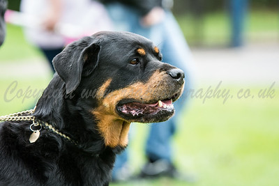 Calcot K9 Dogs