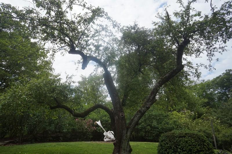 Reeves-Reed Arboretum 18.jpg
