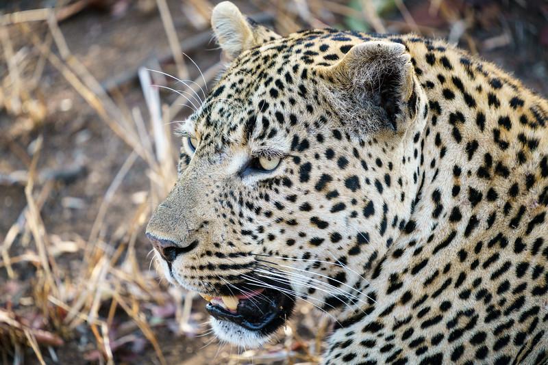 LeopardHills-20171023-1373.jpg